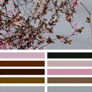 Cherry Blossom Palette